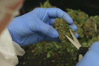 cannabis-based
