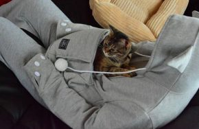 hoodie for your pet